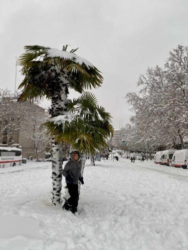 sStorm Filomena causes rare heavy snow in Spain