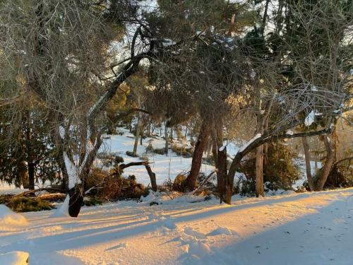 Storm Filomena causes rare heavy snow in Spain